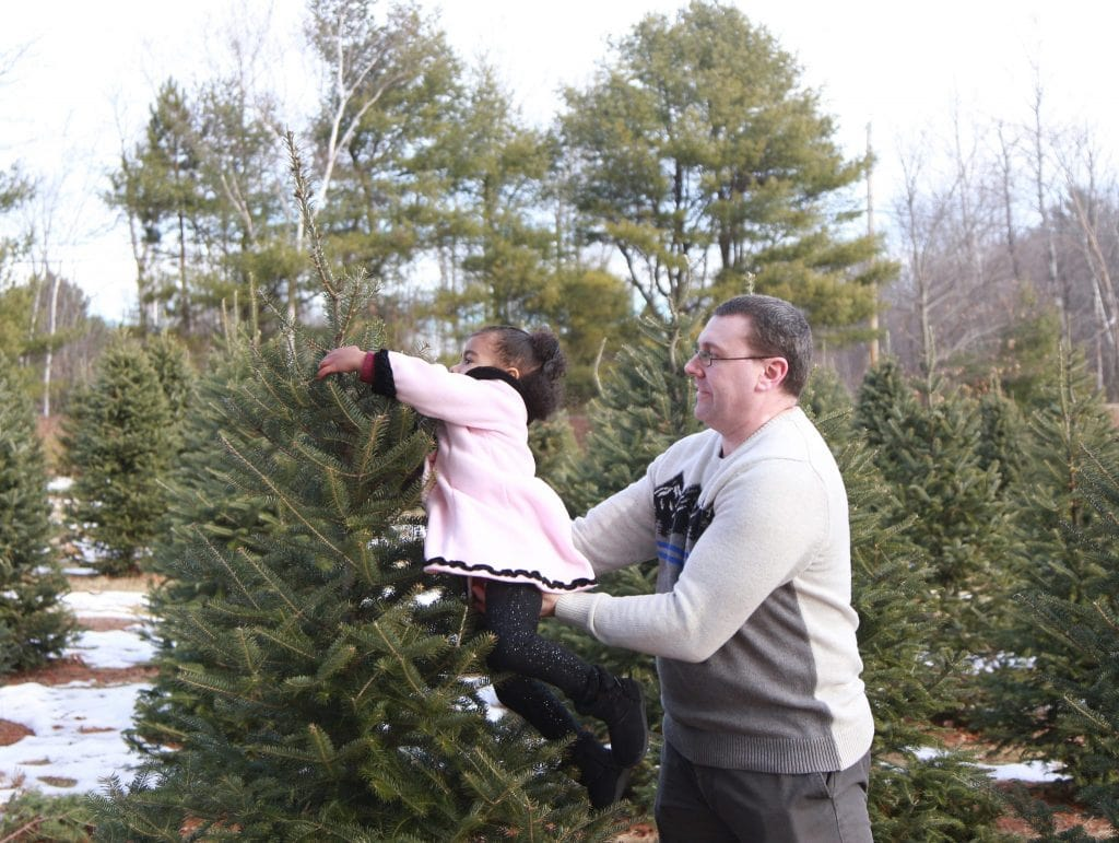 dad lifting his two year old to touch the top of the christmas tree in the tree farm